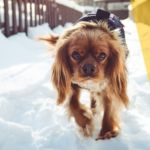 ¿Canadá se detiene con una tormenta de nieve? [Fotos y Videos]